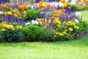 Beautiful Multicolored Flowerbed On Green Lawn