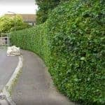 Hedge Project