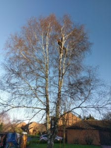Before Tree Reduction in Northampton